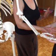 Stage d'anatomie pour le YOGA : dimanche 14 mai