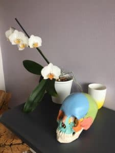Modele de crâne